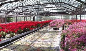 Floricoltura Alberti e caldaia a biomassa