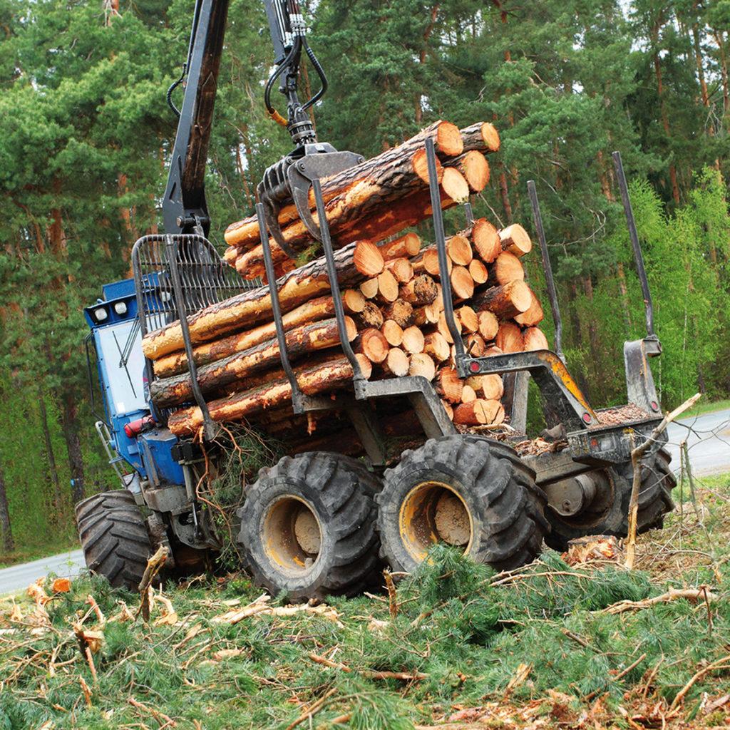 legno energia